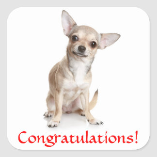 Congratulations Chihuahua Puppy Sticker
