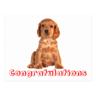 Congratulations Cocker Spaniel Puppy Dog Postcard
