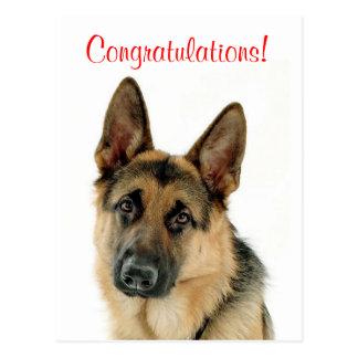 Congratulations German Shepherd Puppy Dog Postcard