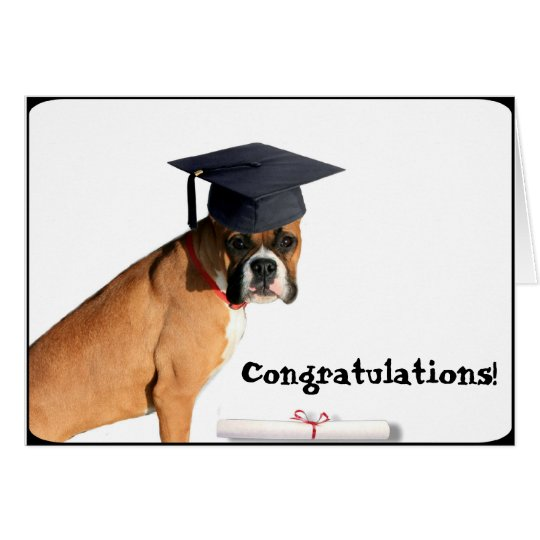 Congratulations graduate  Boxer greeting card
