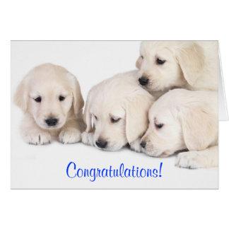 Congratulations Labrador Retriever Puppies Card