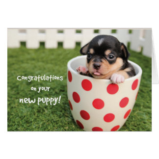 Congratulations on New Puppy, Adoption Chihuahua Card