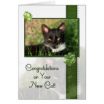 Congratulations on Your New Cat