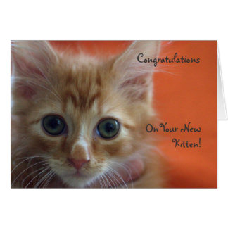 Congratulations on Your New Kitten Greeting Cards