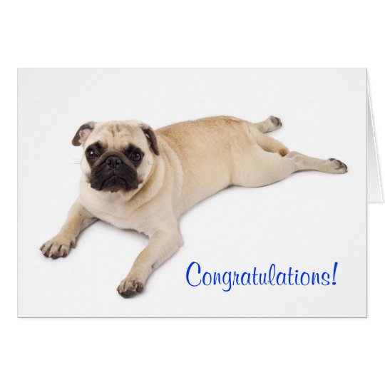 Congratulations Pug Blank Note Card