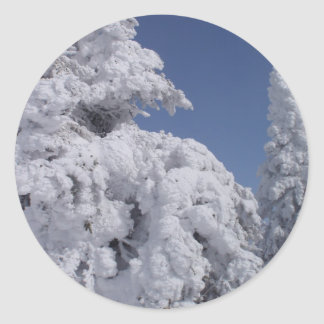 Conifer trees plastered with snow classic round sticker