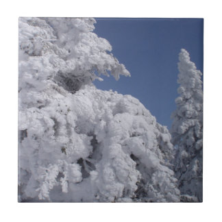 Conifer trees plastered with snow small square tile