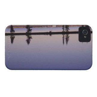 Conifer Trees, Yellowstone Lake Case-Mate iPhone 4 Case