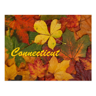 Connecticut Autumn Leaves Postcard