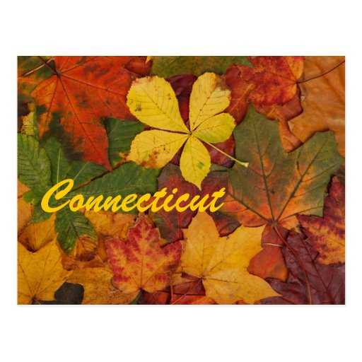 Connecticut Autumn Leaves Postcard