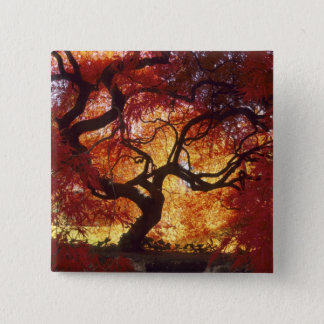 Connecticut: Darien, Japanese maple 'Acer 15 Cm Square Badge