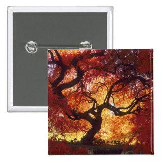 Connecticut: Darien, Japanese maple 'Acer 15 Cm Square Badge