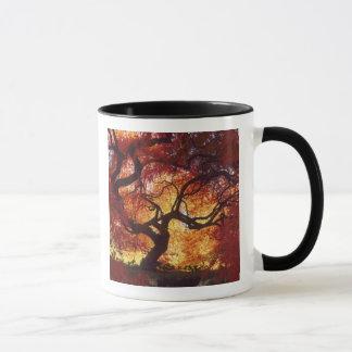 Connecticut: Darien, Japanese maple 'Acer Mug