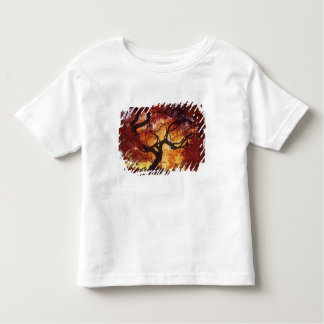 Connecticut: Darien, Japanese maple 'Acer Tee Shirts