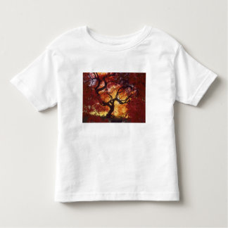 Connecticut: Darien, Japanese maple 'Acer Toddler T-Shirt