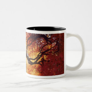 Connecticut: Darien, Japanese maple 'Acer Two-Tone Coffee Mug