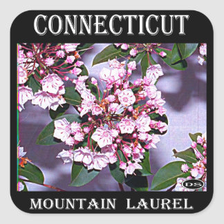 Connecticut Mountain Laurel Square Sticker