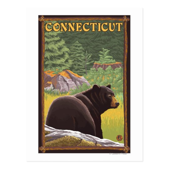 ConnecticutBlack Bear in Forest Postcard