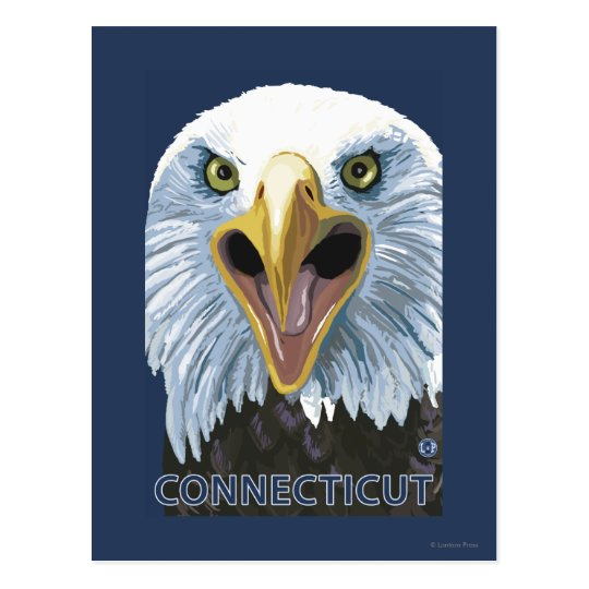 ConnecticutEagle Up Close Postcard