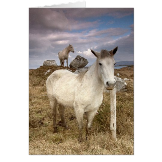 Connemara Ponies. Card by cARTerART