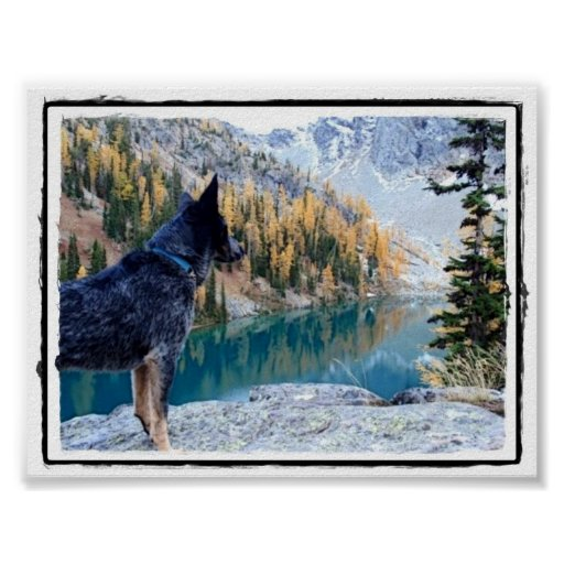 """Conservation Canine """"Max"""" Picture/Poster Poster"""