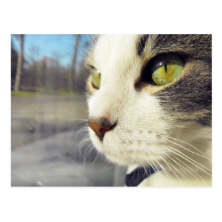 Contemplative Cat Postcard