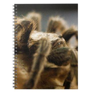 Contemplative Spider - Tarantula Art Image 8 Notebook