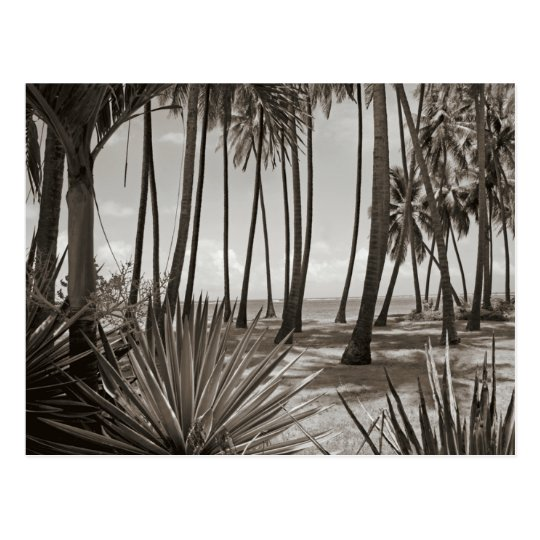 Contemporary Caribbean Palm Trees Black and White Postcard