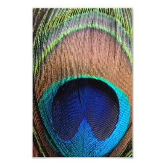Contemporary Peacock Feather Close-Up Photo Art