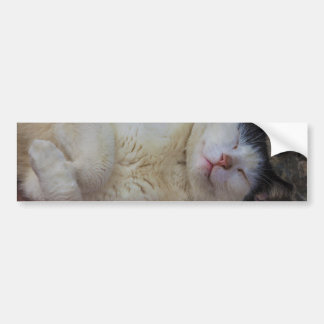 Content Cat Sleeping on Her Back Car Bumper Sticker