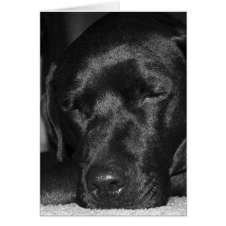Content, sleeping black labrador greeting card