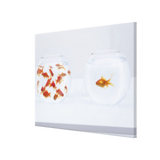Contrast of  many goldfish in fishbowl and canvas print