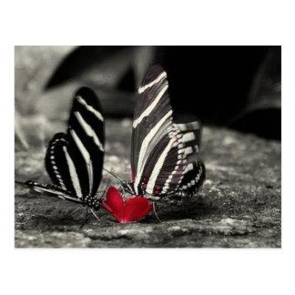 contrast vlinder wens kaart
