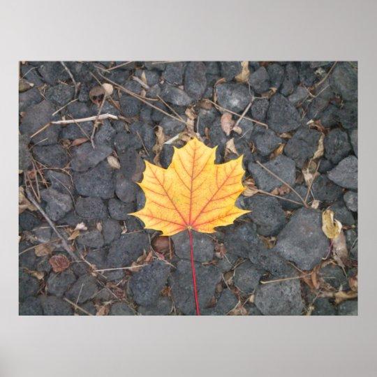 Contrasting Leaf- poster