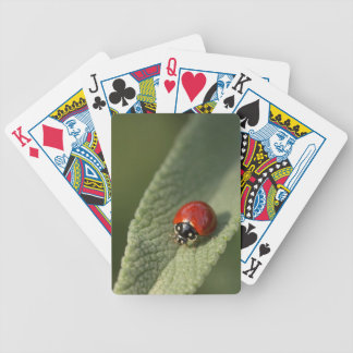 Convergent ladybird beetle on Cleveland sage Bicycle Playing Cards