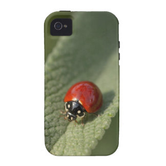 Convergent ladybird beetle on Cleveland sage iPhone 4/4S Cases