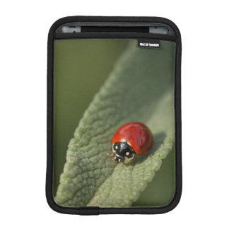 Convergent ladybird beetle on Cleveland sage iPad Mini Sleeve