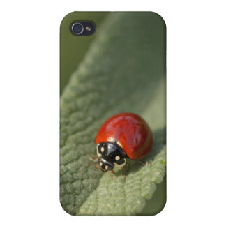 Convergent ladybird beetle on Cleveland sage iPhone 4/4S Cover