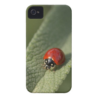 Convergent ladybird beetle on Cleveland sage iPhone 4 Case-Mate Cases