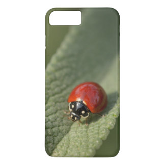 Convergent ladybird beetle on Cleveland sage iPhone 8 Plus/7 Plus Case