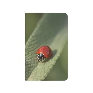 Convergent ladybird beetle on Cleveland sage Journal