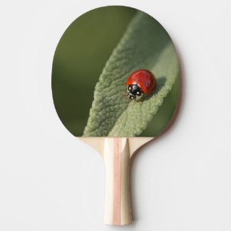 Convergent ladybird beetle on Cleveland sage Ping Pong Paddle