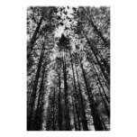 Converging Trees Posters