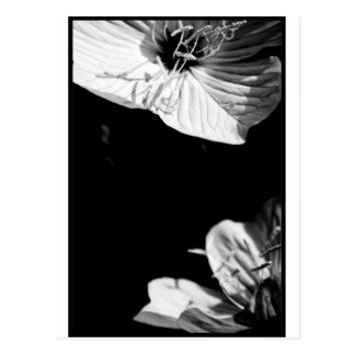 Conversation Black and White Floral Photography P Postcard