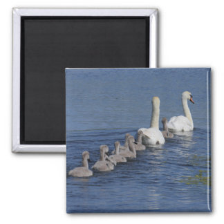 Convoy of Swans Magnet