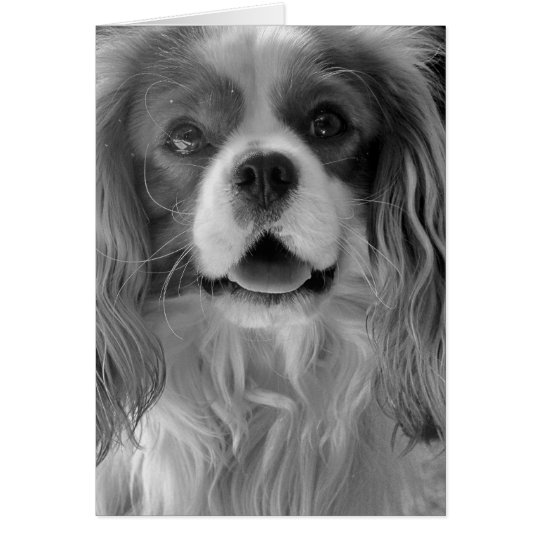 Cookie the King Charles Spaniel Card