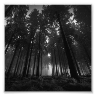 Cool Black and White Forest Fog Silence Gifts Art Photo