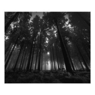 Cool Black and White Forest Fog Silence Gifts Photo