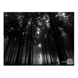 Cool Black and White Forest Fog Silence Gifts Postcard