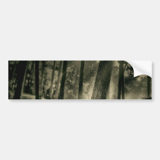 Cool Black and White Forest Sun Rays Nature Gifts Bumper Stickers